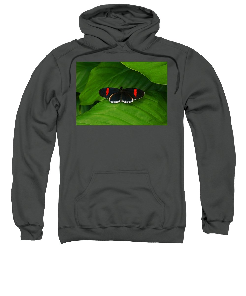 Butterfly Sweatshirt featuring the photograph See Me by Sumi Martin
