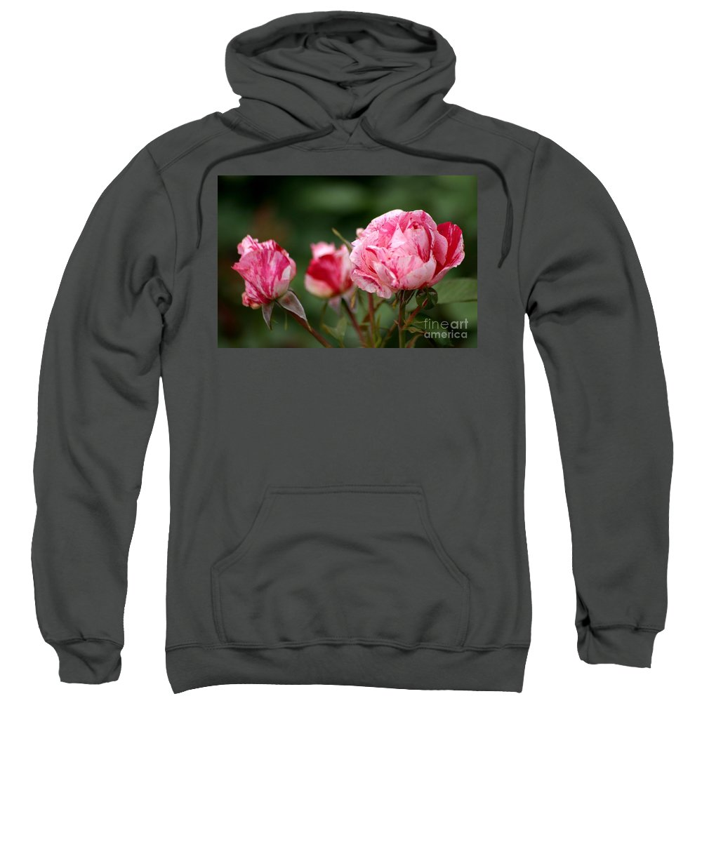 Rose Sweatshirt featuring the photograph Sentimental Rose by Living Color Photography Lorraine Lynch