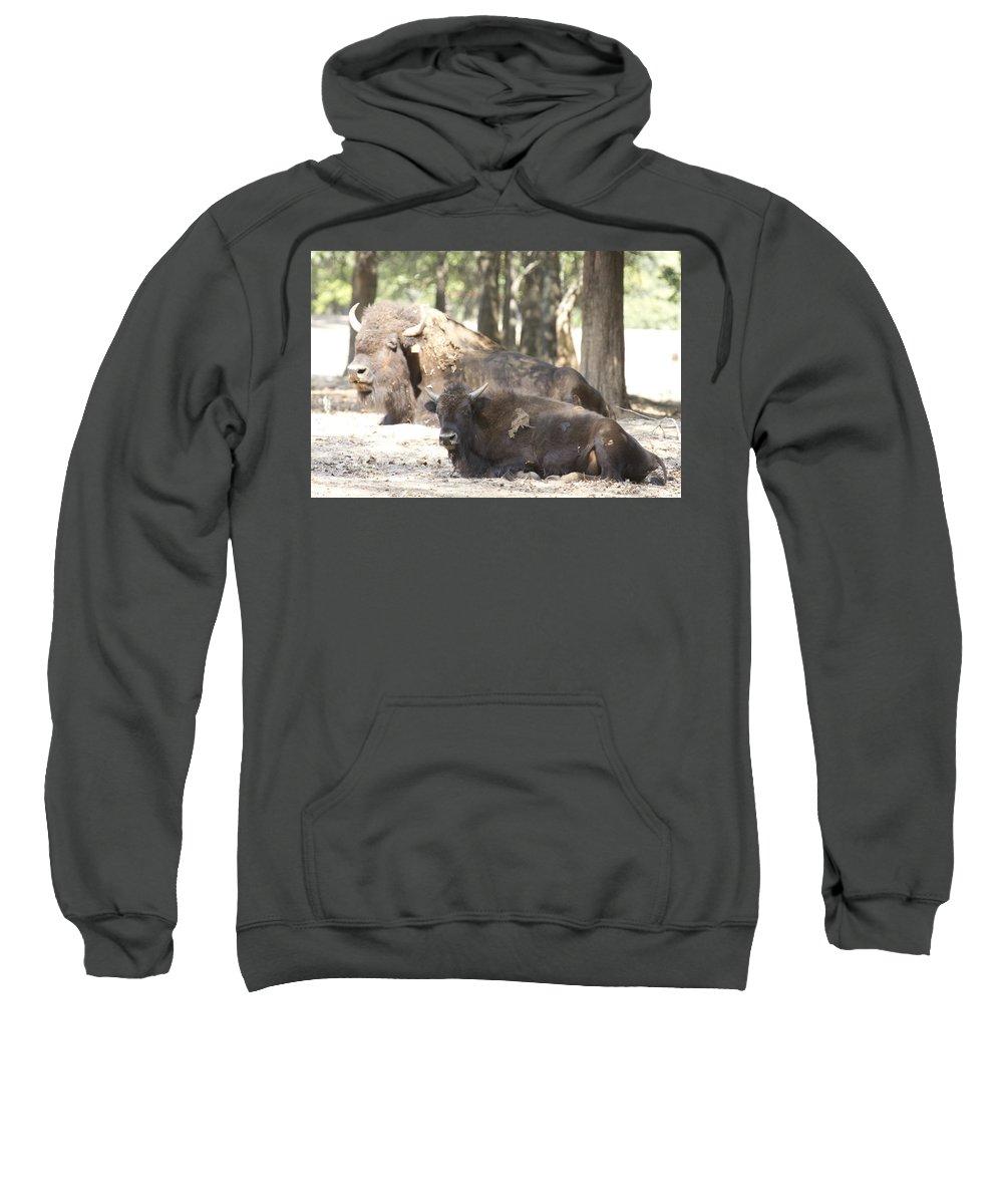 Buffalo Sweatshirt featuring the photograph Shaded Resting Place by Douglas Barnard