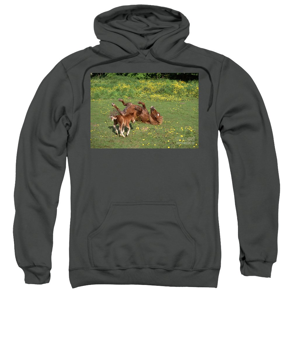 Animal Sweatshirt featuring the photograph Shetland Pony And Foal Playing by Mark Taylor