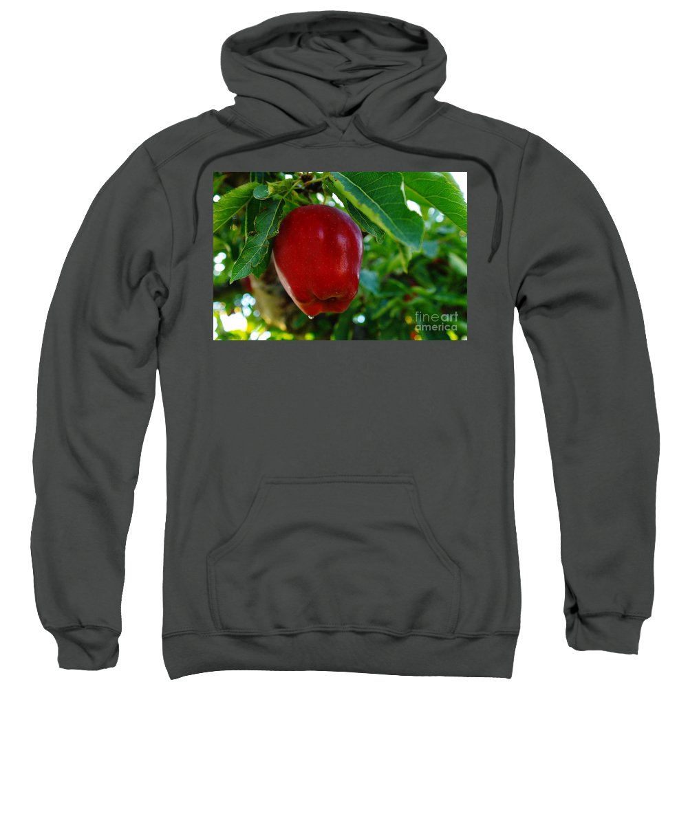 Fruit Sweatshirt featuring the photograph Shiny Red And Ripe by Jeff Swan