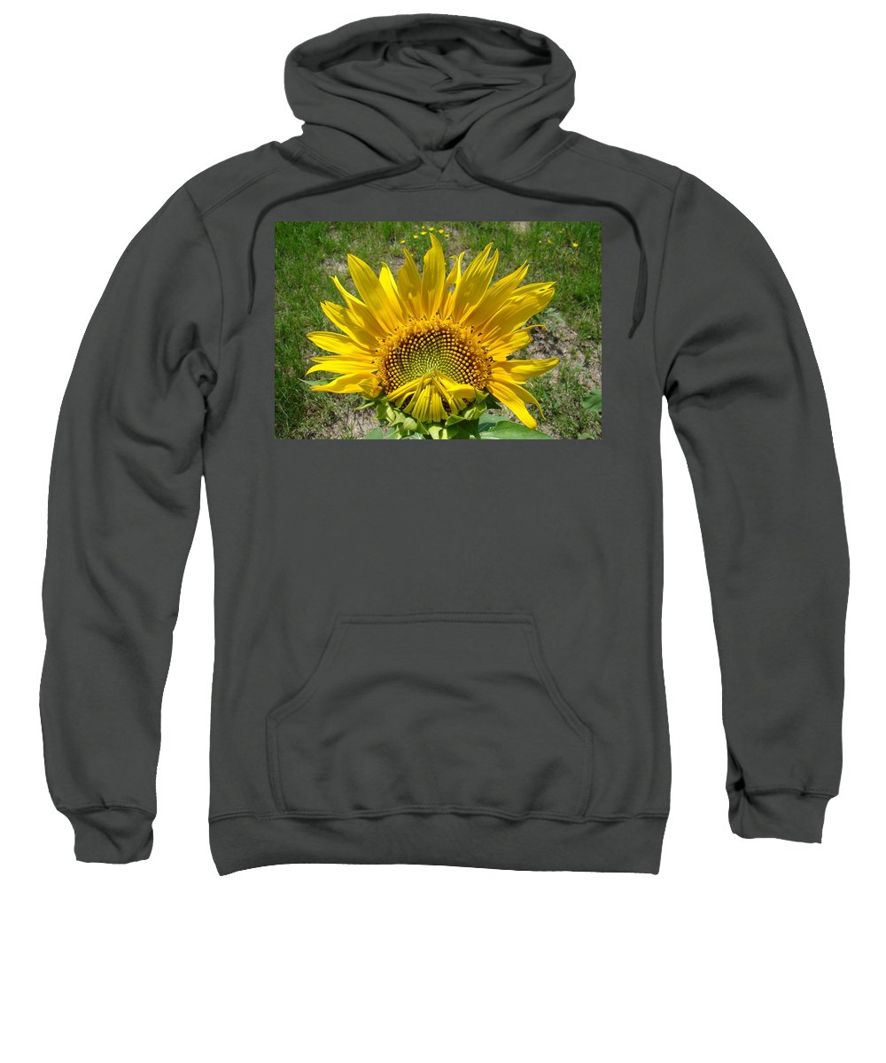 Sunflower Sweatshirt featuring the photograph Shy Sunflower by Michael MacGregor