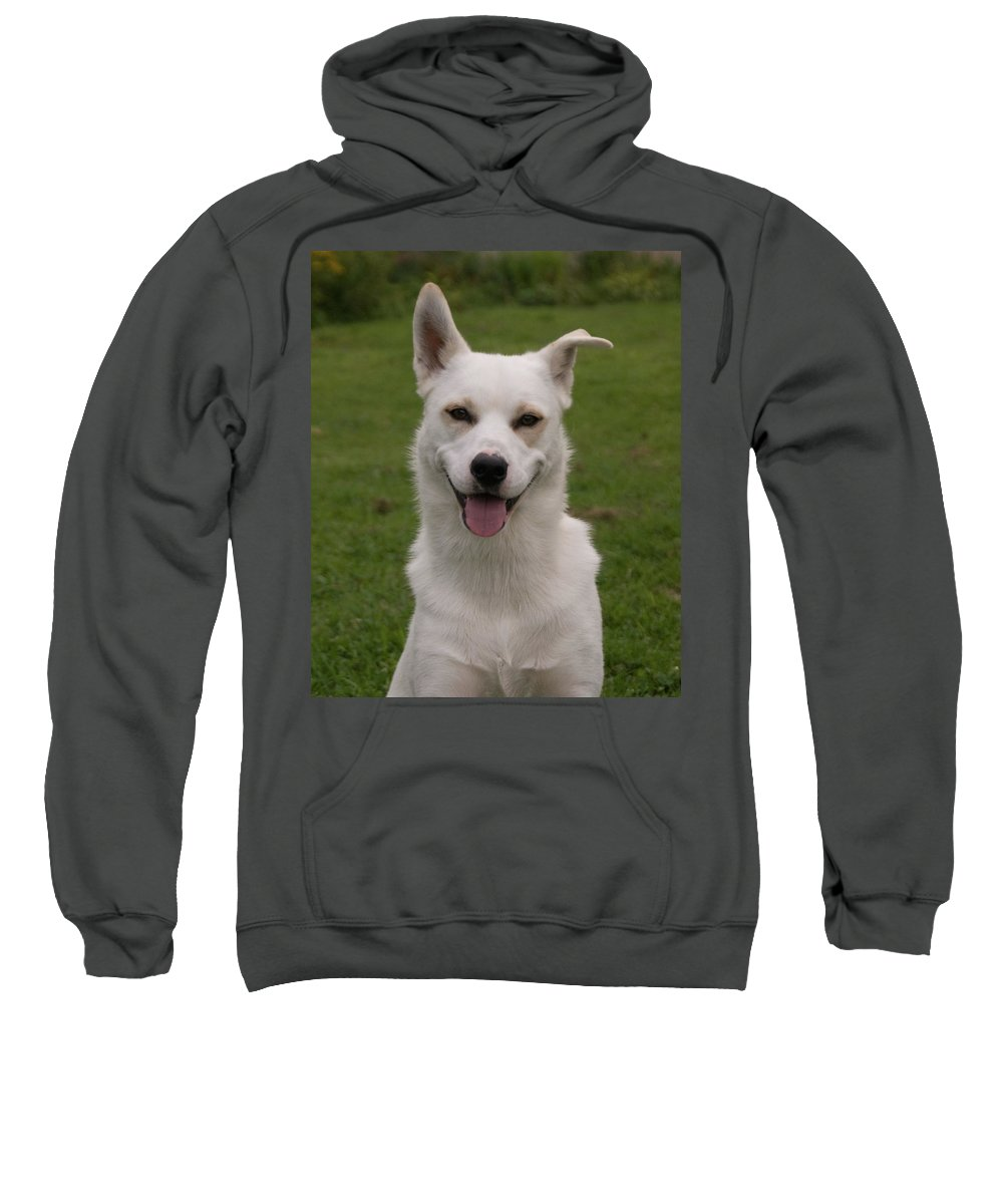 Dog Sweatshirt featuring the photograph Smiley 0151 by Guy Whiteley