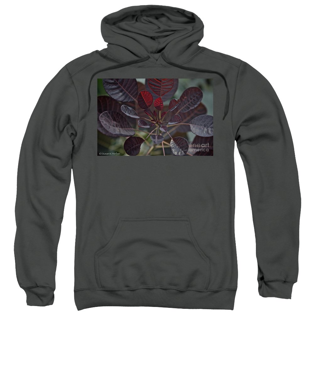 Outdoors Sweatshirt featuring the photograph Smoke Tree by Susan Herber