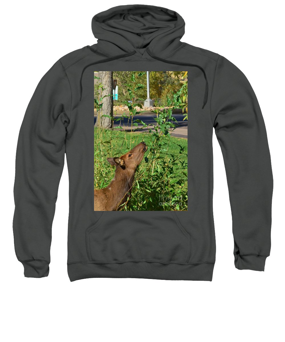 Elk Sweatshirt featuring the photograph Snack Time by Kathleen Struckle