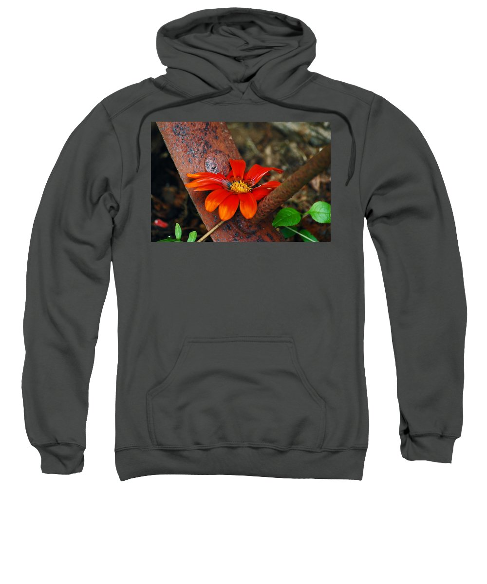Daisy Sweatshirt featuring the photograph Something Old And Something New by Lori Tambakis