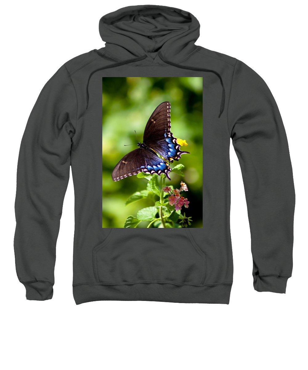 Butterfly Sweatshirt featuring the photograph Spicebush Swallowtail by Lynne Jenkins