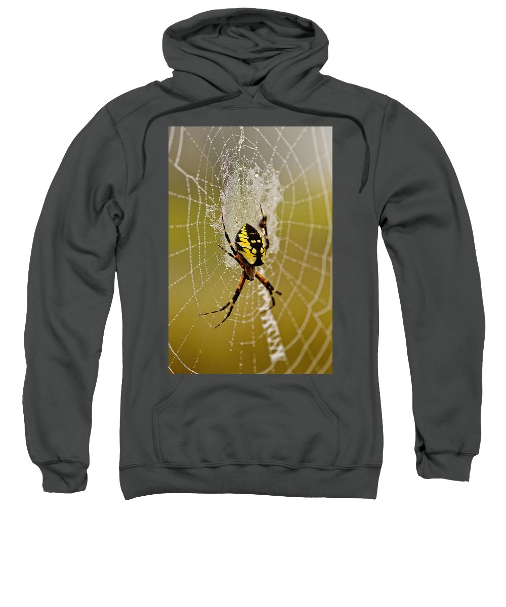 Spider Sweatshirt featuring the photograph Spider Power by Susan Capuano
