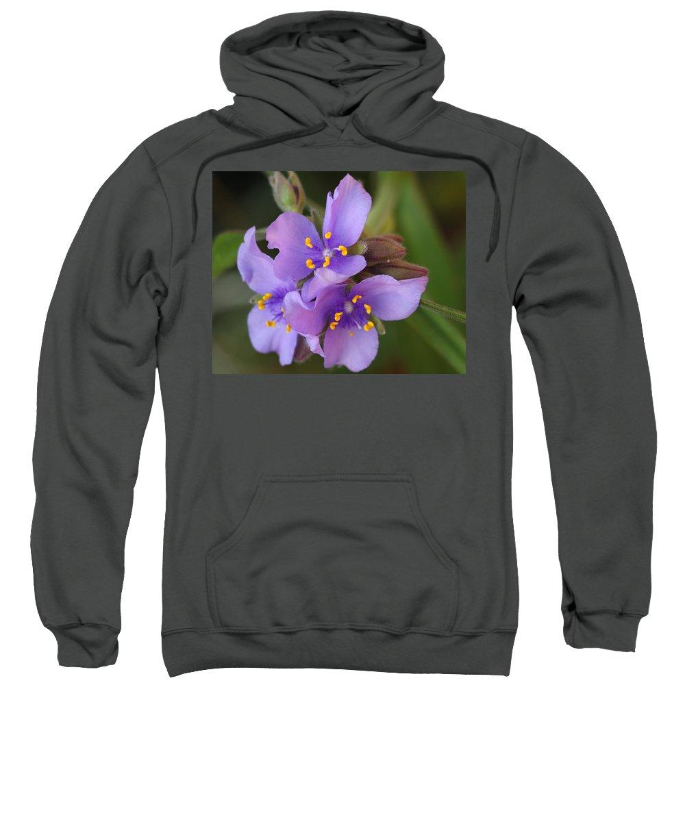 Wildflower Sweatshirt featuring the photograph Spiderwort by Andrew McInnes
