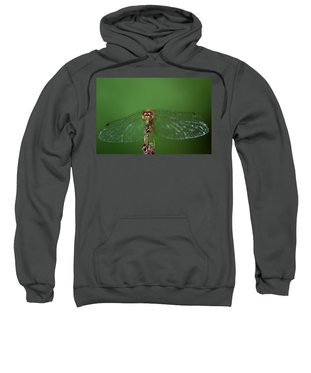 Dragonfly Sweatshirt featuring the photograph Spread Your Wings And Fly Away by Evelina Kremsdorf