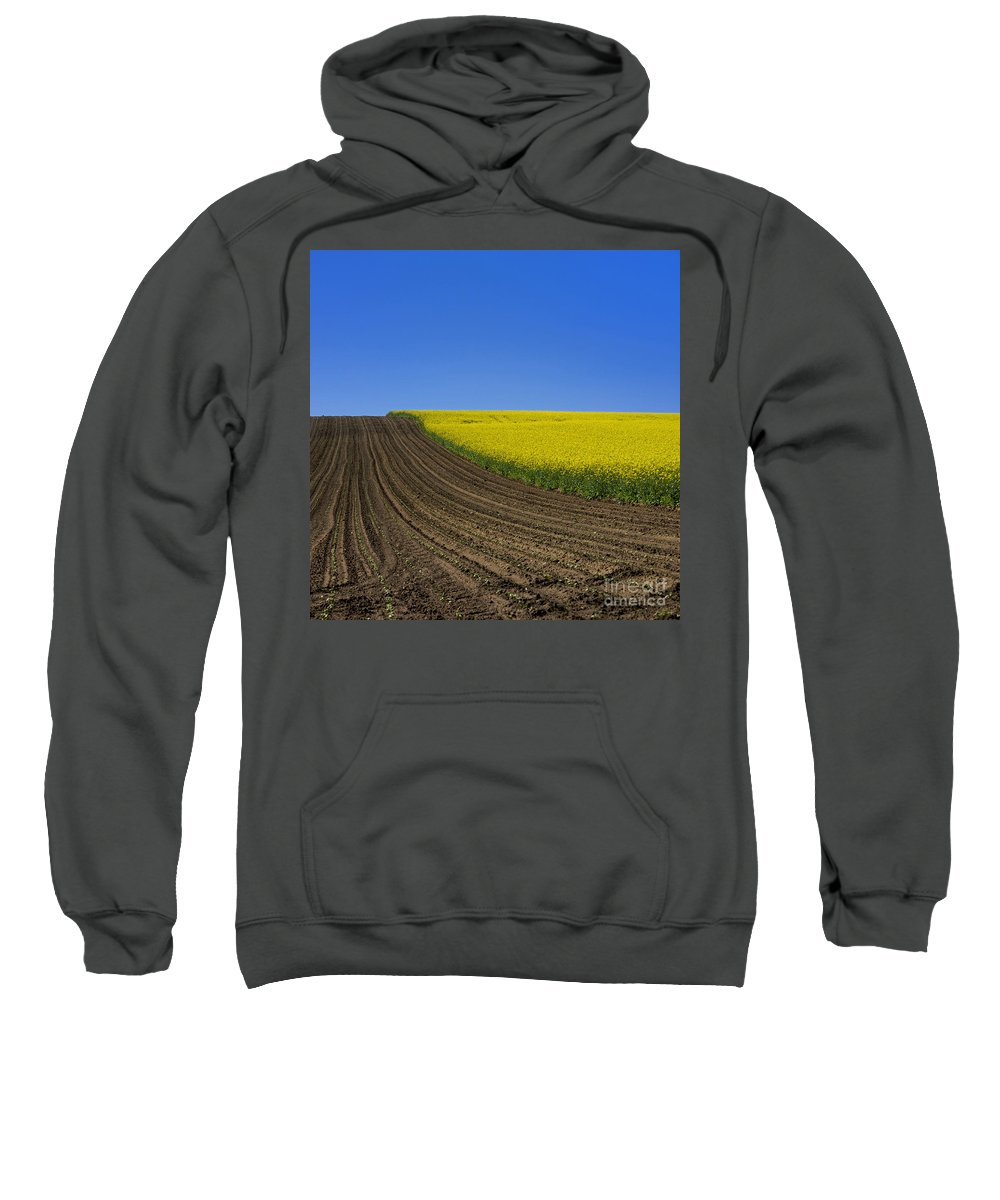 Useful Sweatshirt featuring the photograph Sprouting Field Of Sunflowers And Field Of Rape. Auvergne. France. Europe by Bernard Jaubert