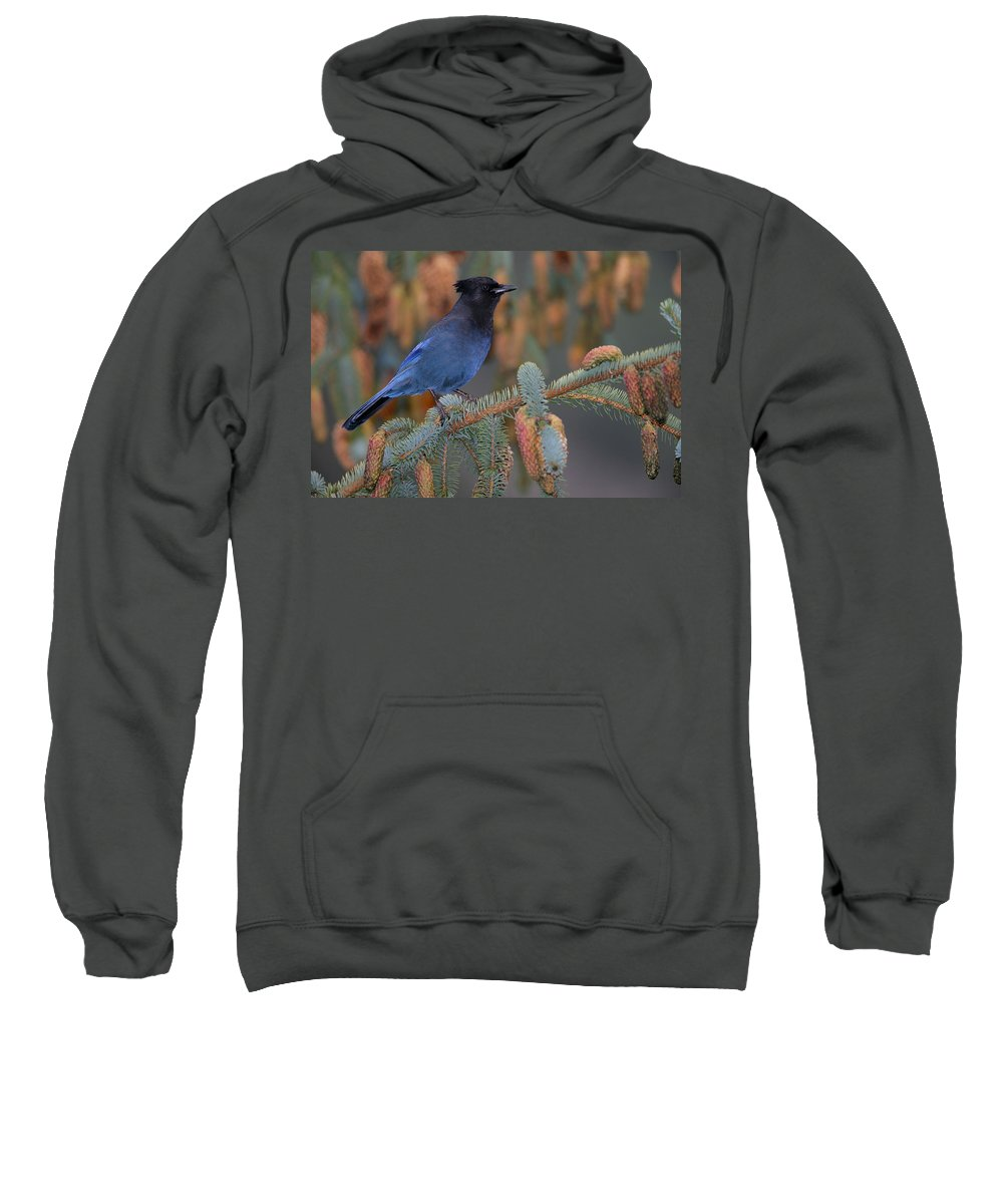 Light Sweatshirt featuring the photograph Stellar Jay, Haines, Alaska by Robert Postma