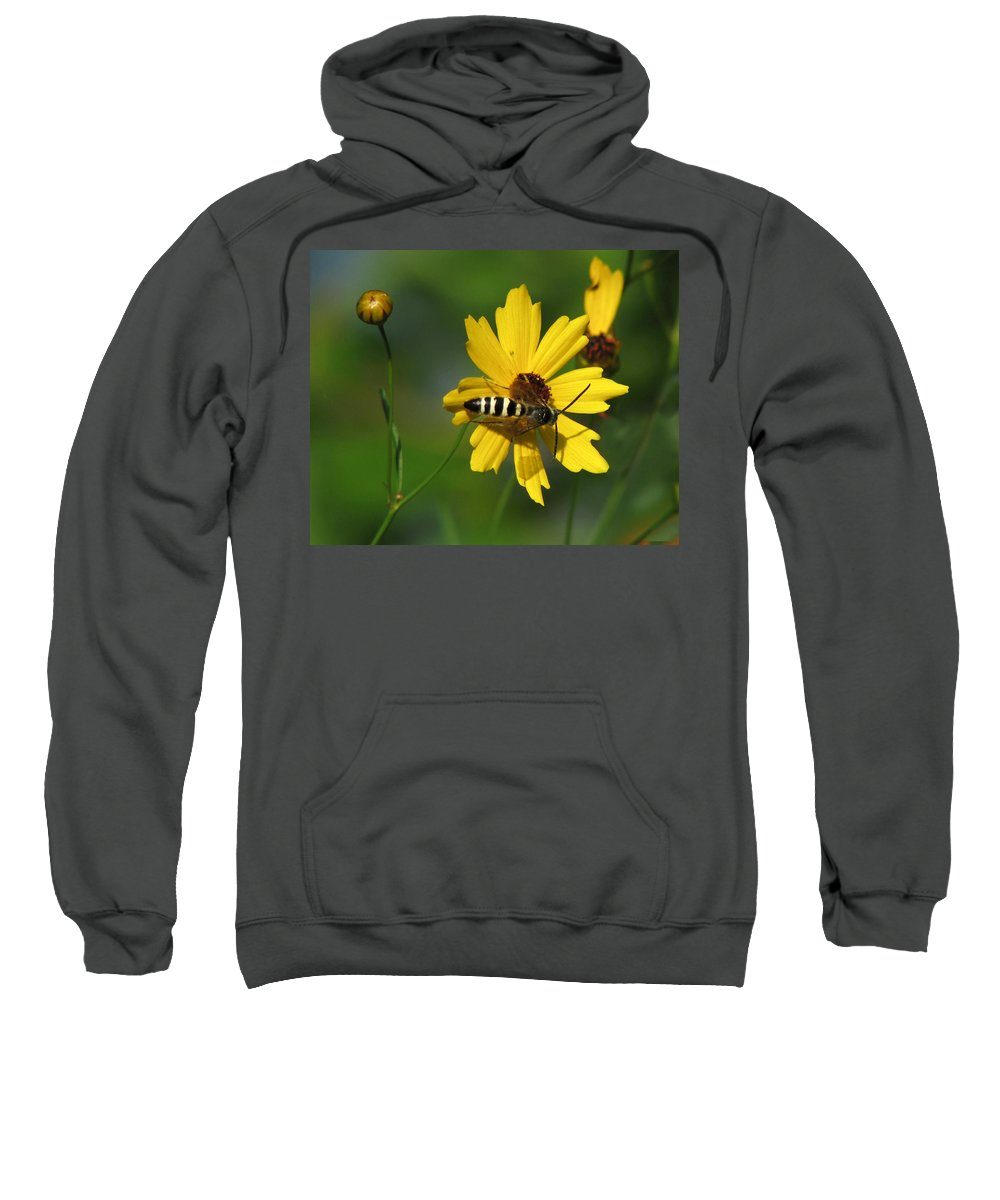 Nature Sweatshirt featuring the photograph Striped Bee On Wildflower by Peg Urban