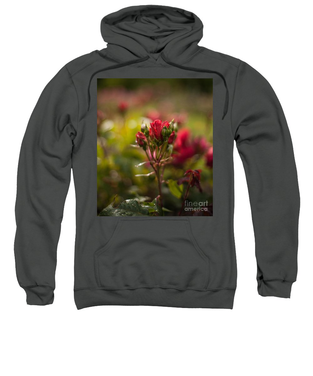 Flower Sweatshirt featuring the photograph Sun In The Garden by Mike Reid
