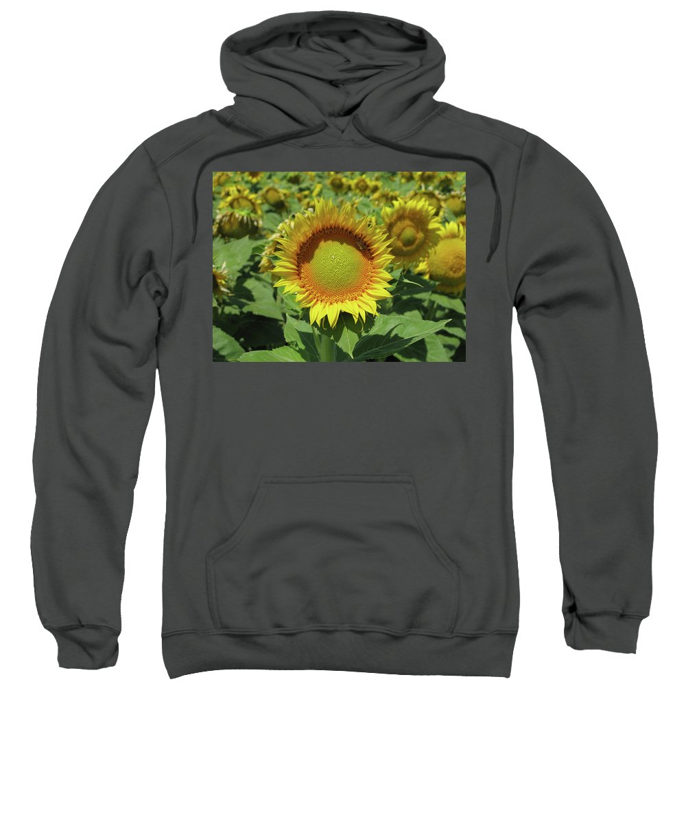 Sunflower Sweatshirt featuring the photograph Sunflower And Honeybee July Two K O Nine by Carl Deaville