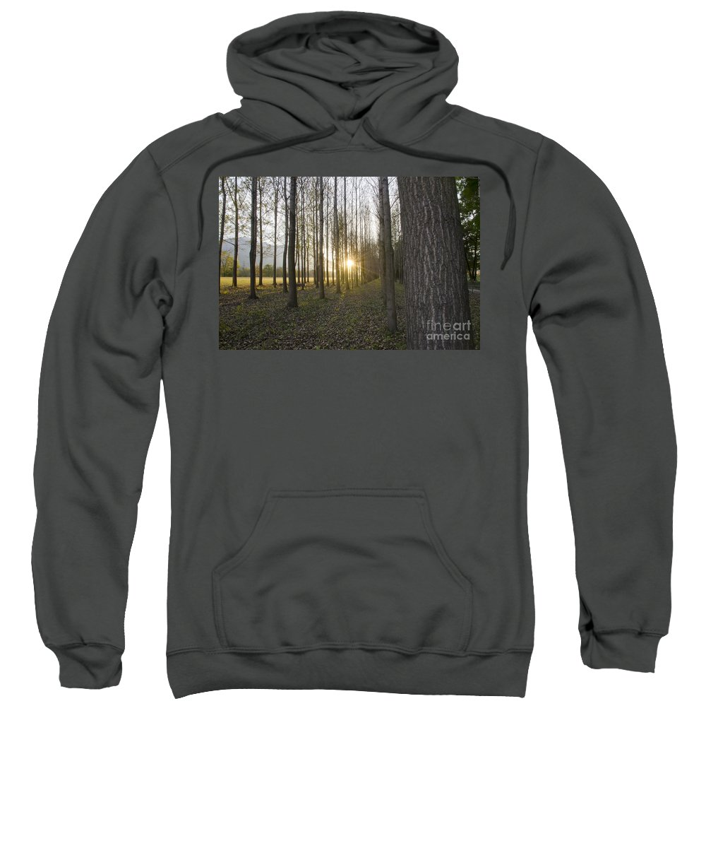 Field Sweatshirt featuring the photograph Sunlight In The Forest by Mats Silvan