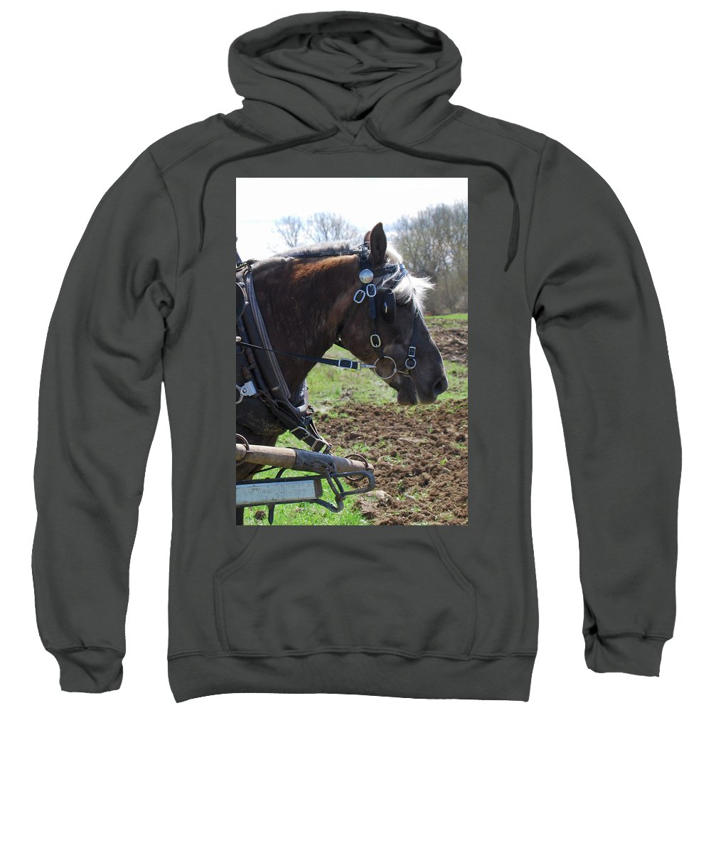 Horse Sweatshirt featuring the photograph Sunlit 1404a by Guy Whiteley