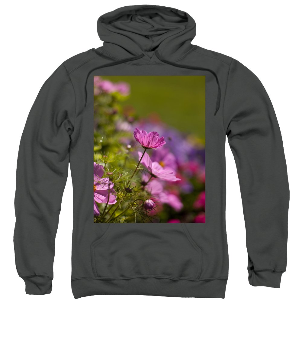 Flower Sweatshirt featuring the photograph Sunlit Cosmos by Mike Reid