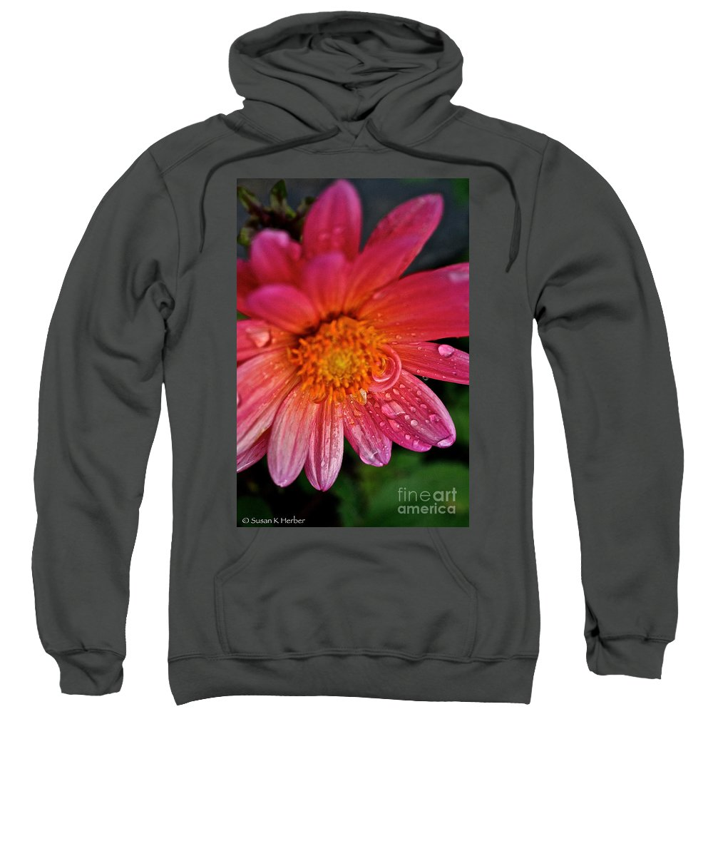 Floral Sweatshirt featuring the photograph Sunrise Dahlia by Susan Herber