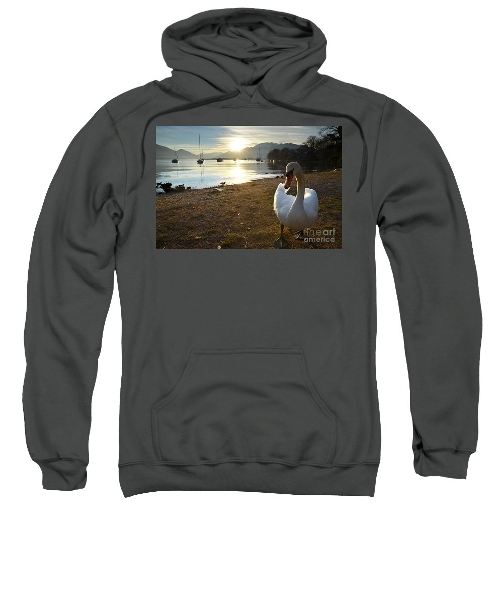 Swan Sweatshirt featuring the photograph Swan On The Beach by Mats Silvan