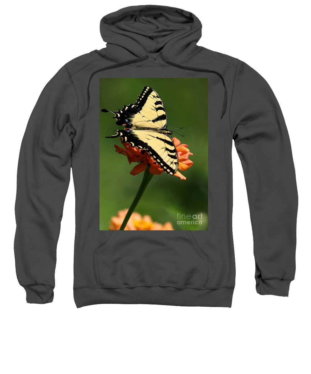 Piano Key Sweatshirt featuring the photograph Tantalizing Tiger Swallowtail Butterfly by Sabrina L Ryan