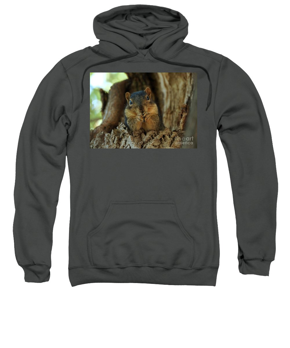 Squirrel Sweatshirt featuring the photograph The Dug Out by Lori Tordsen