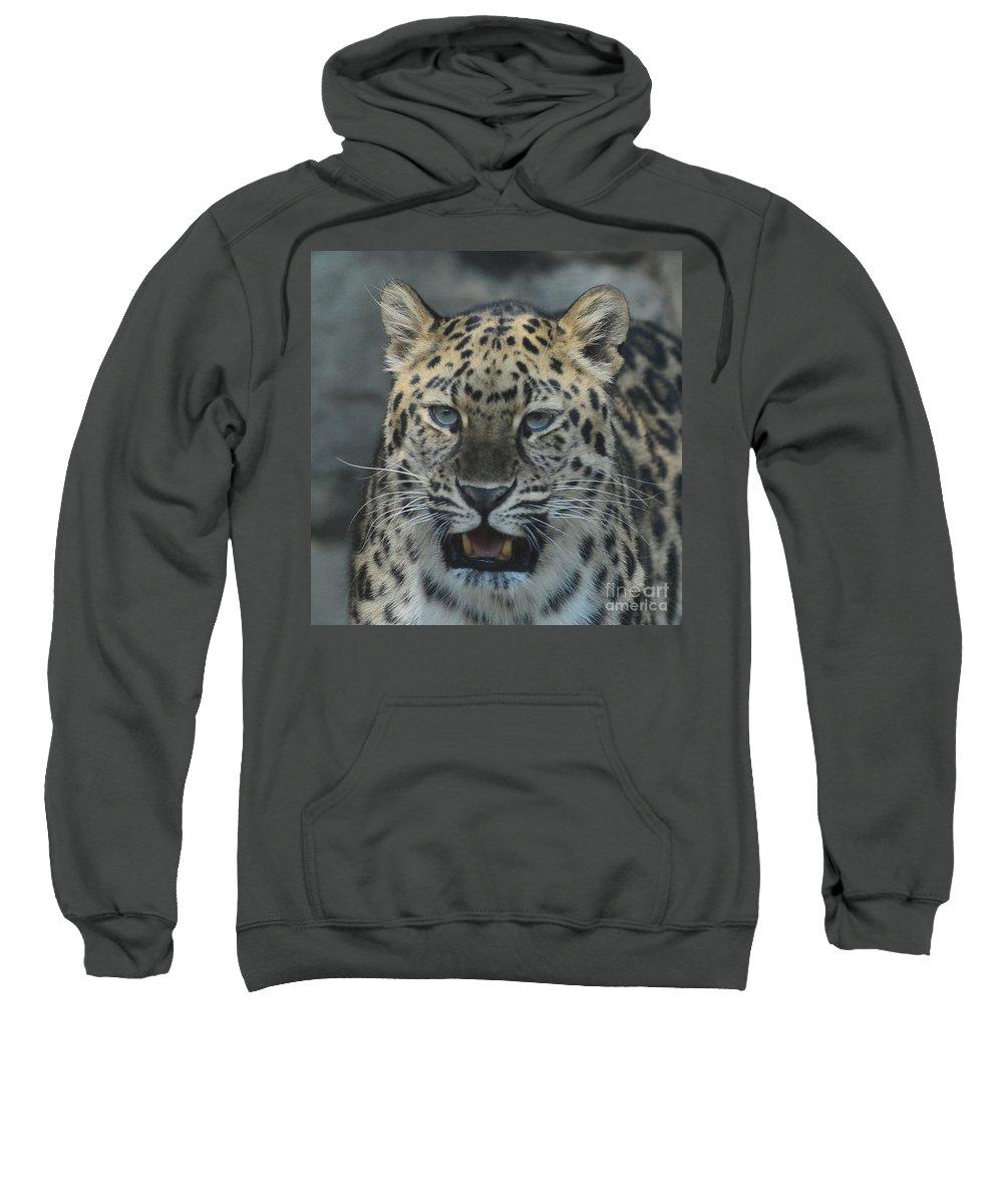 Jaguar Sweatshirt featuring the photograph The Eyes Of A Jaguar by Paul Ward