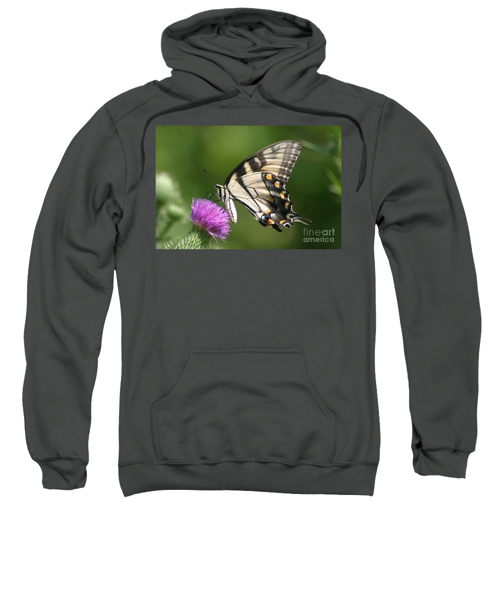 Butterfly Sweatshirt featuring the photograph The Love Of Thistle by Living Color Photography Lorraine Lynch