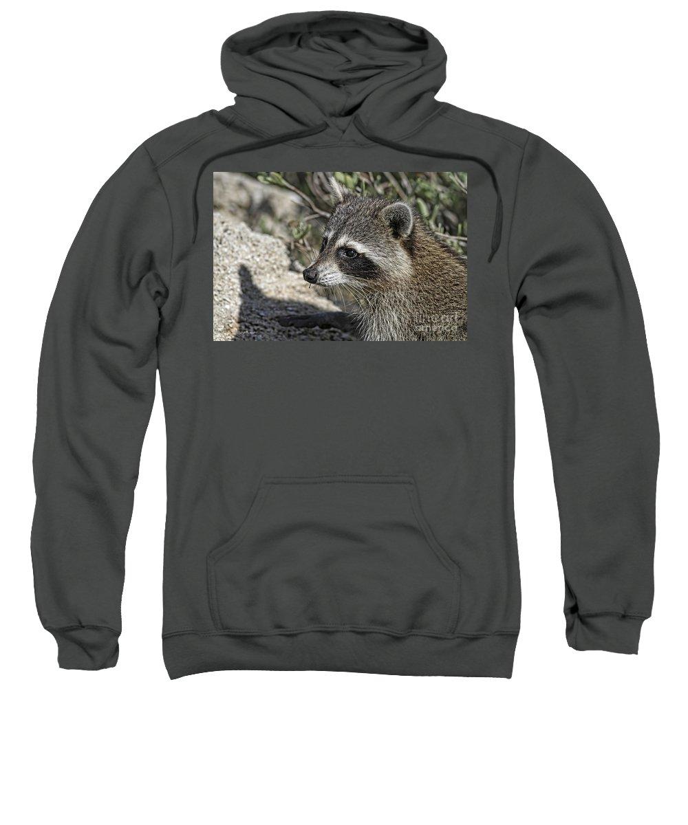 Racoon Sweatshirt featuring the photograph The Masked Bandit by Deborah Benoit