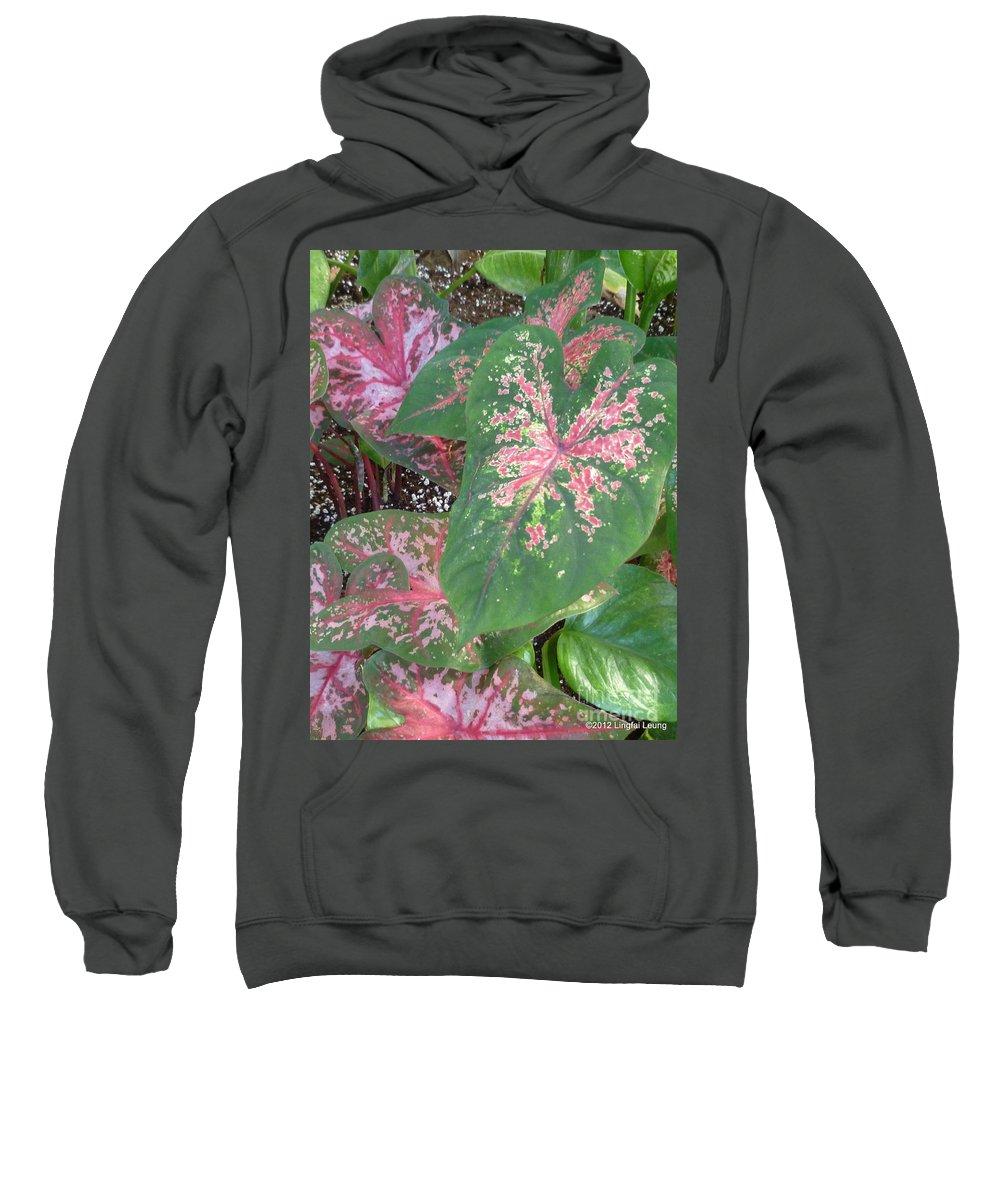 Foliage Sweatshirt featuring the photograph The Mosaics by Lingfai Leung