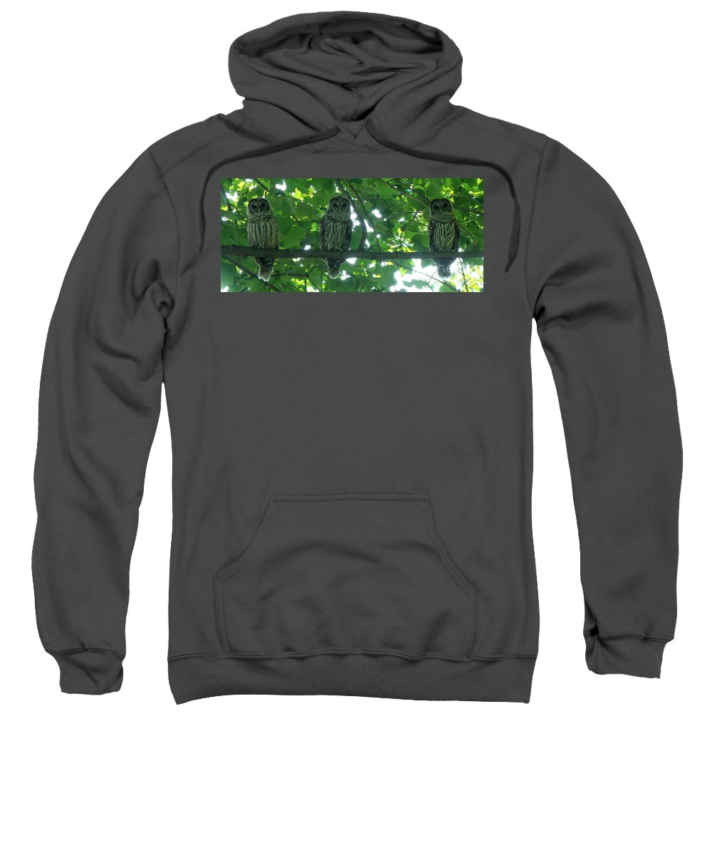 Owls Sweatshirt featuring the photograph Three Barred Owls by Lainie Wrightson