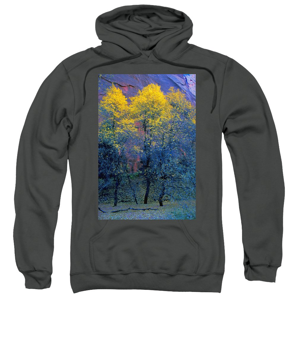 Field Sweatshirt featuring the photograph Three Thin Autumnal Trees In Front Of by Don Hammond