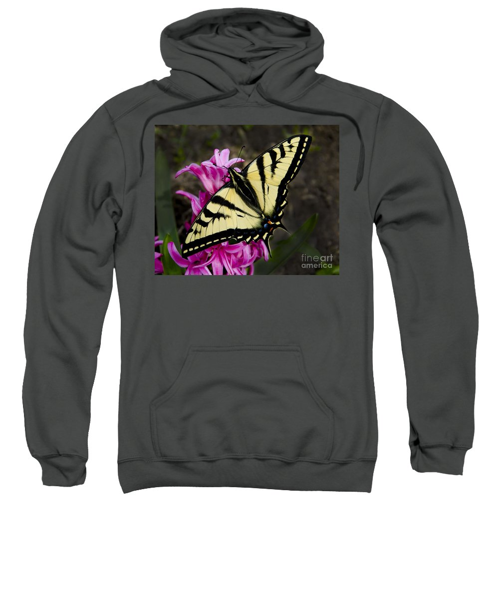 Pink Sweatshirt featuring the photograph Tiger Swallowtail On Pink Hyacinth by Jim And Emily Bush