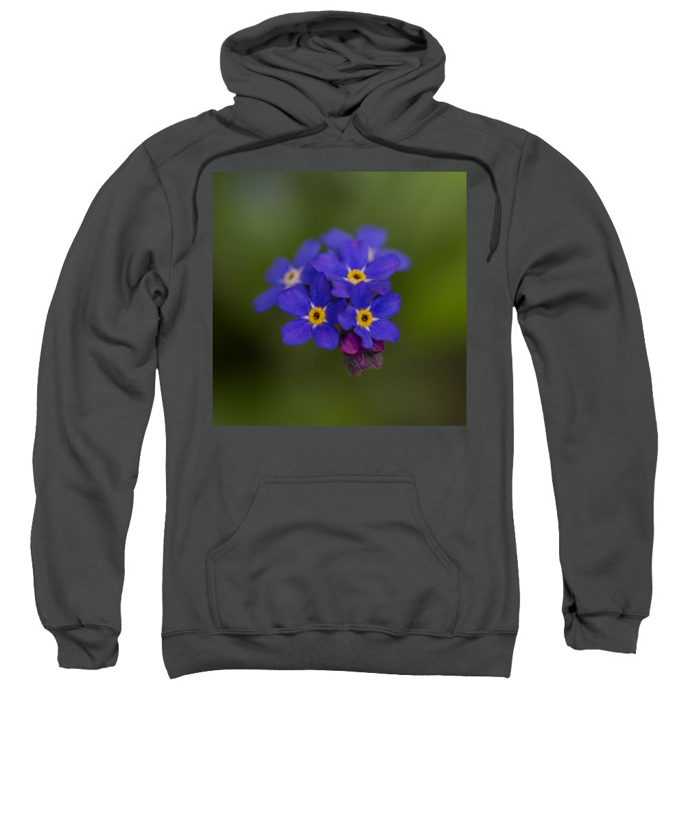 Nature Sweatshirt featuring the photograph Tiny Blossoms by Andreas Levi
