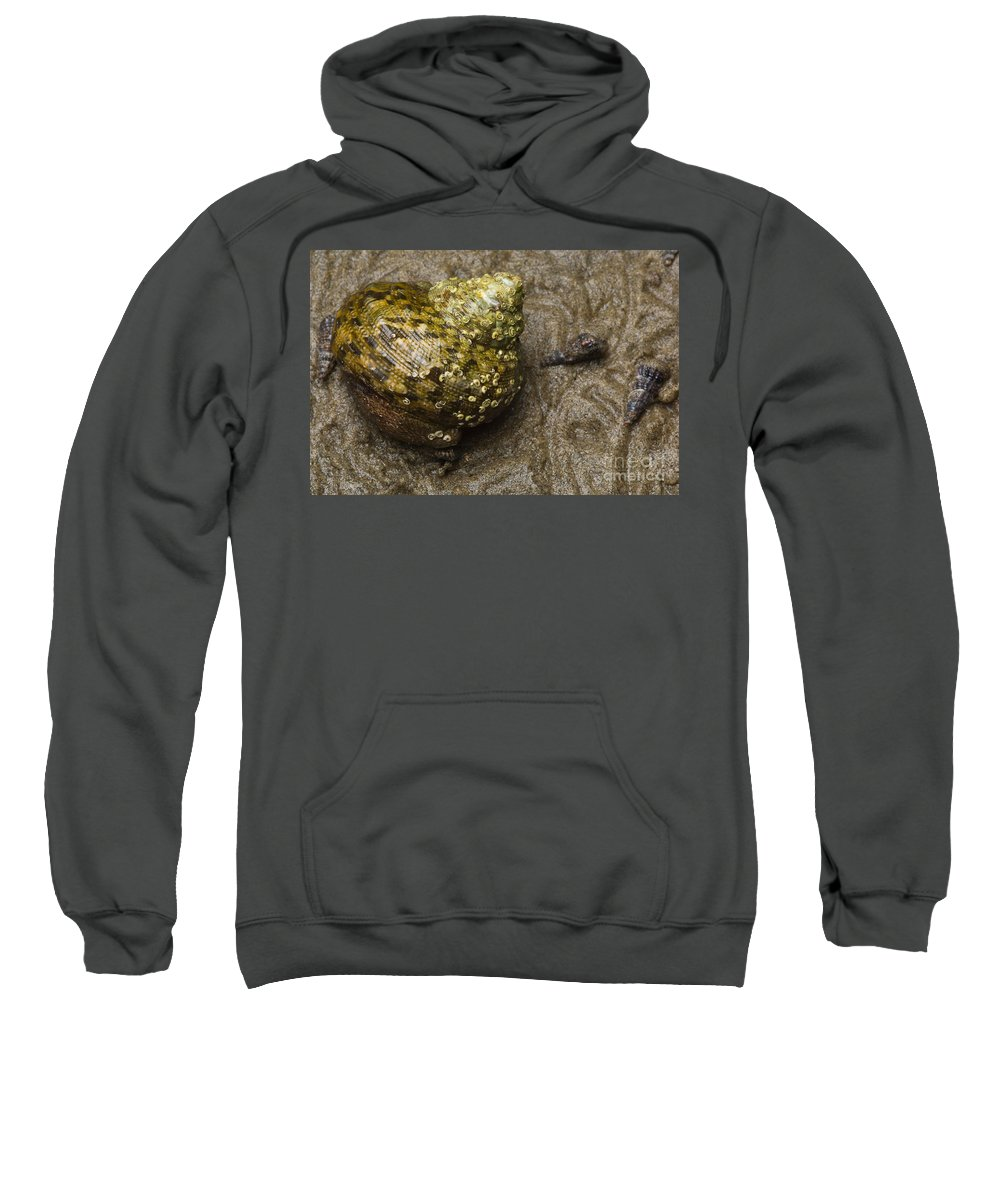 Animal Sweatshirt featuring the photograph Top Shell Clanculus Sp by Raul Gonzalez Perez