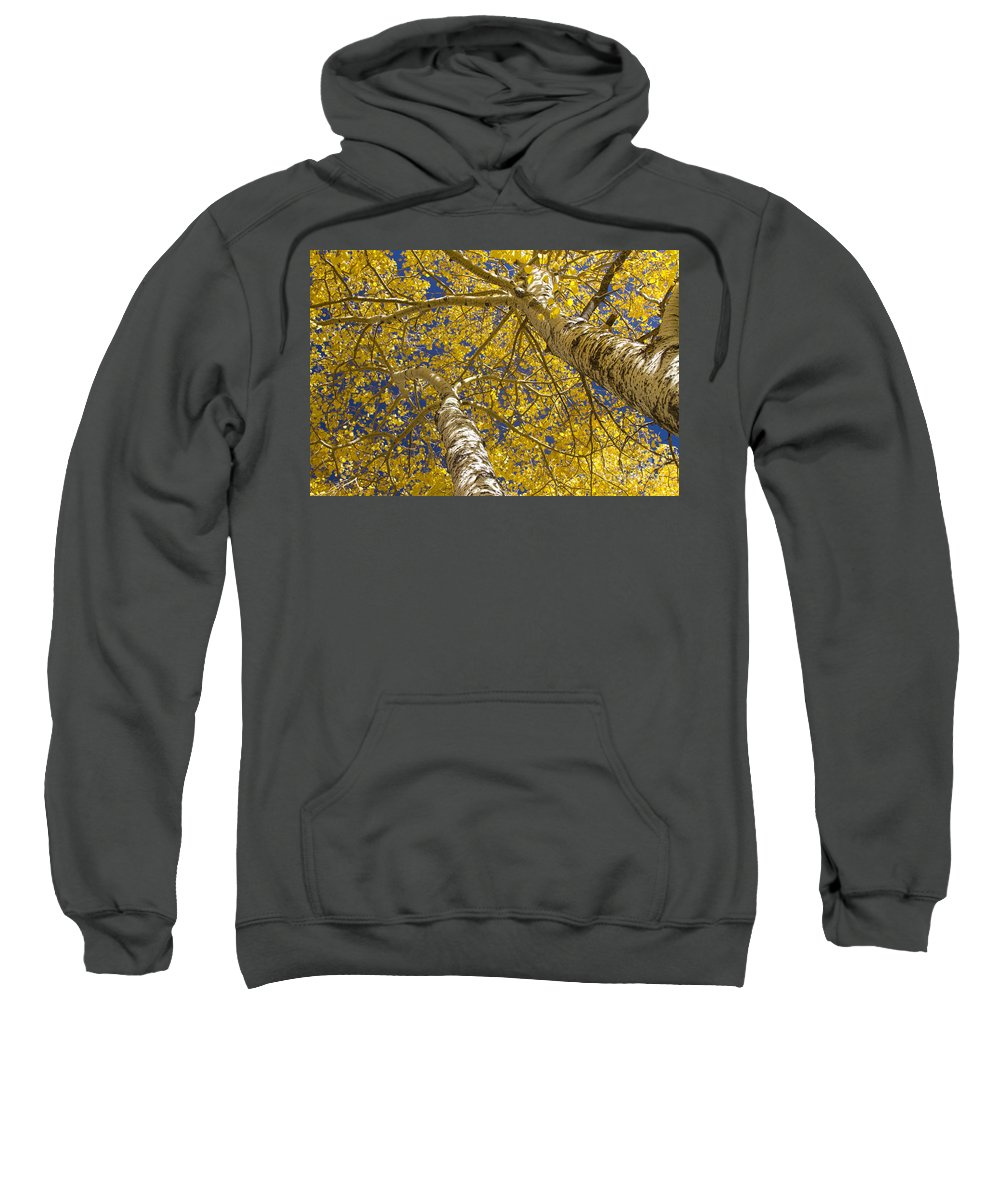 Aspens Sweatshirt featuring the photograph Towering Autumn Aspens With Deep Blue Sky by James BO Insogna