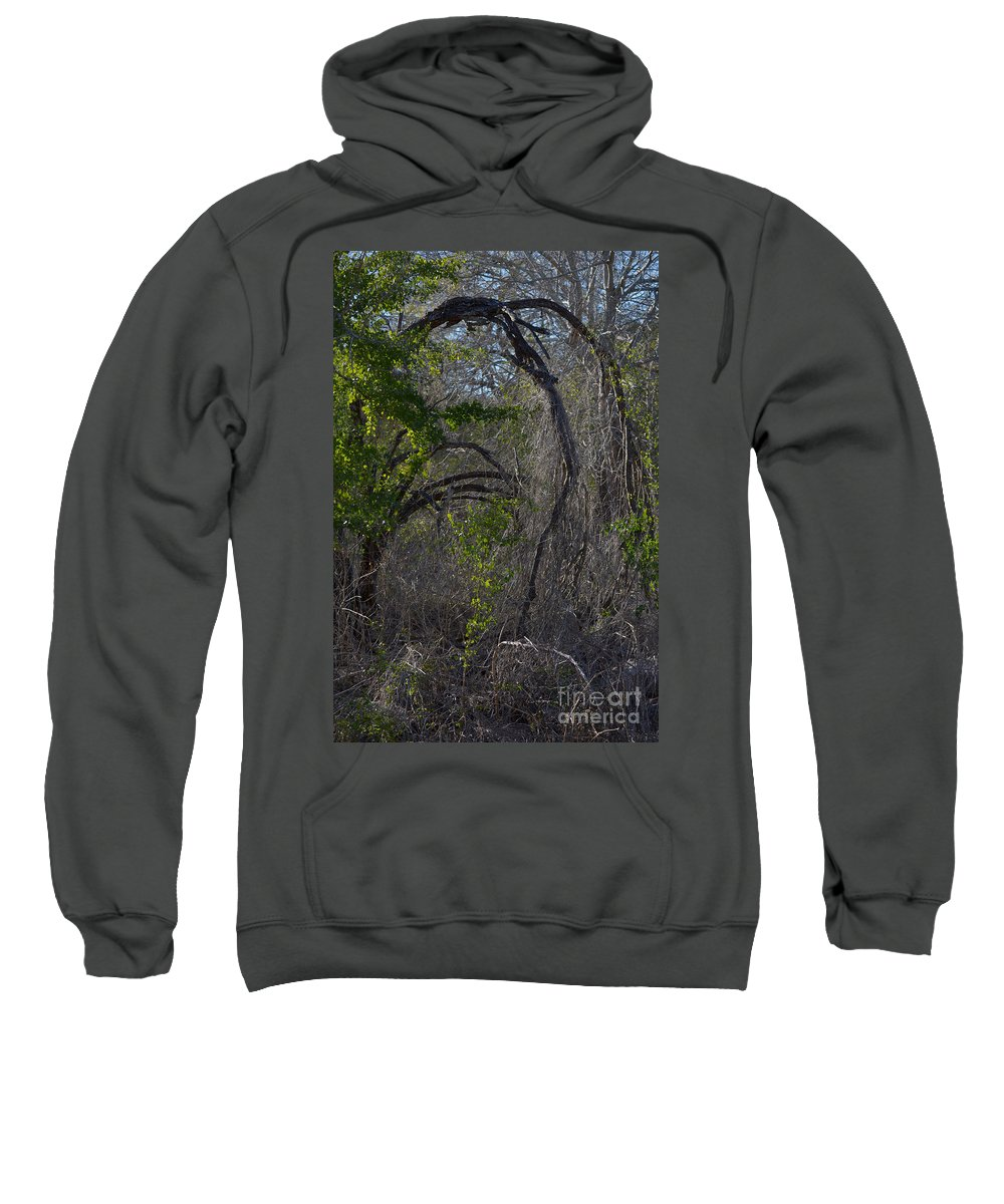 Tree Sweatshirt featuring the photograph Tree Abstract by Donna Brown