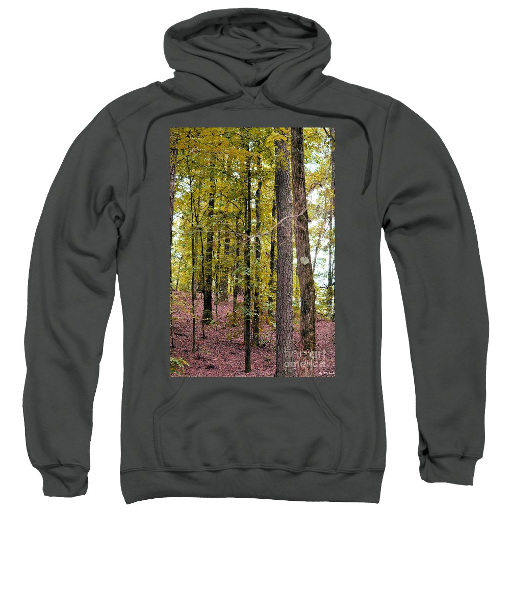 Trees Sweatshirt featuring the photograph Trees Of Golden Hues by Maria Urso
