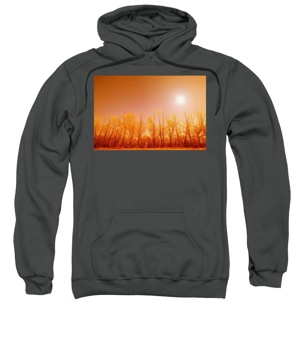 Canada Sweatshirt featuring the photograph Trees With Sunlight by Leah Hammond
