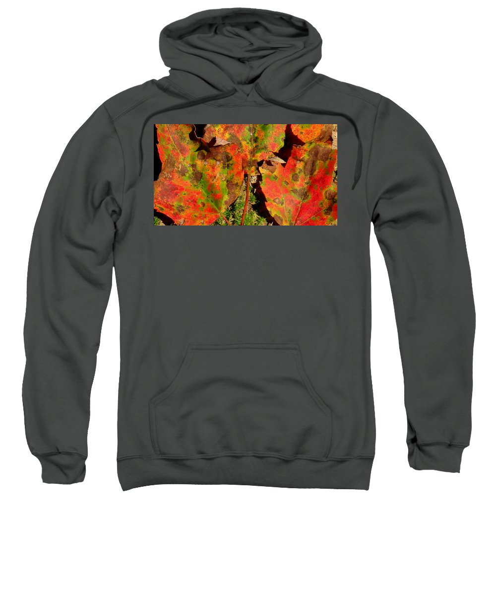 Tres Hojas Sweatshirt featuring the photograph Tres Hojas by Ed Smith