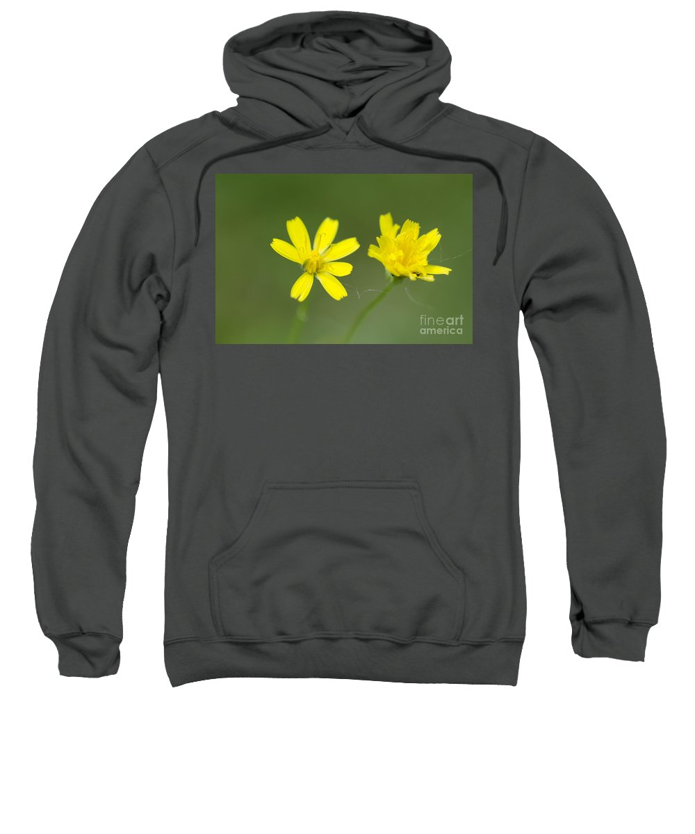 Flowers Sweatshirt featuring the photograph Two Yellow Flowers by Mats Silvan