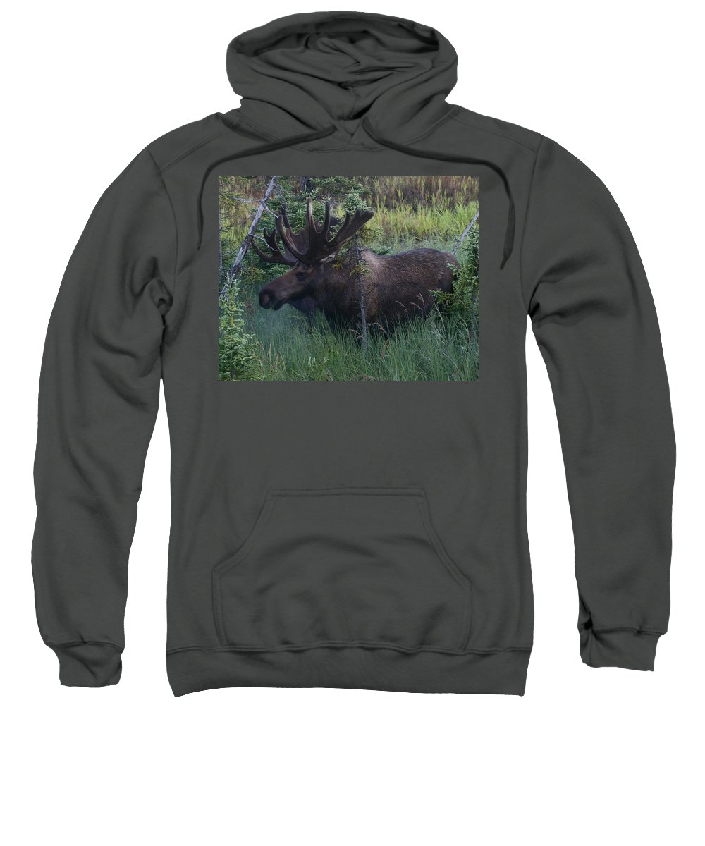 Alaska Sweatshirt featuring the photograph Velvet by Doug Lloyd