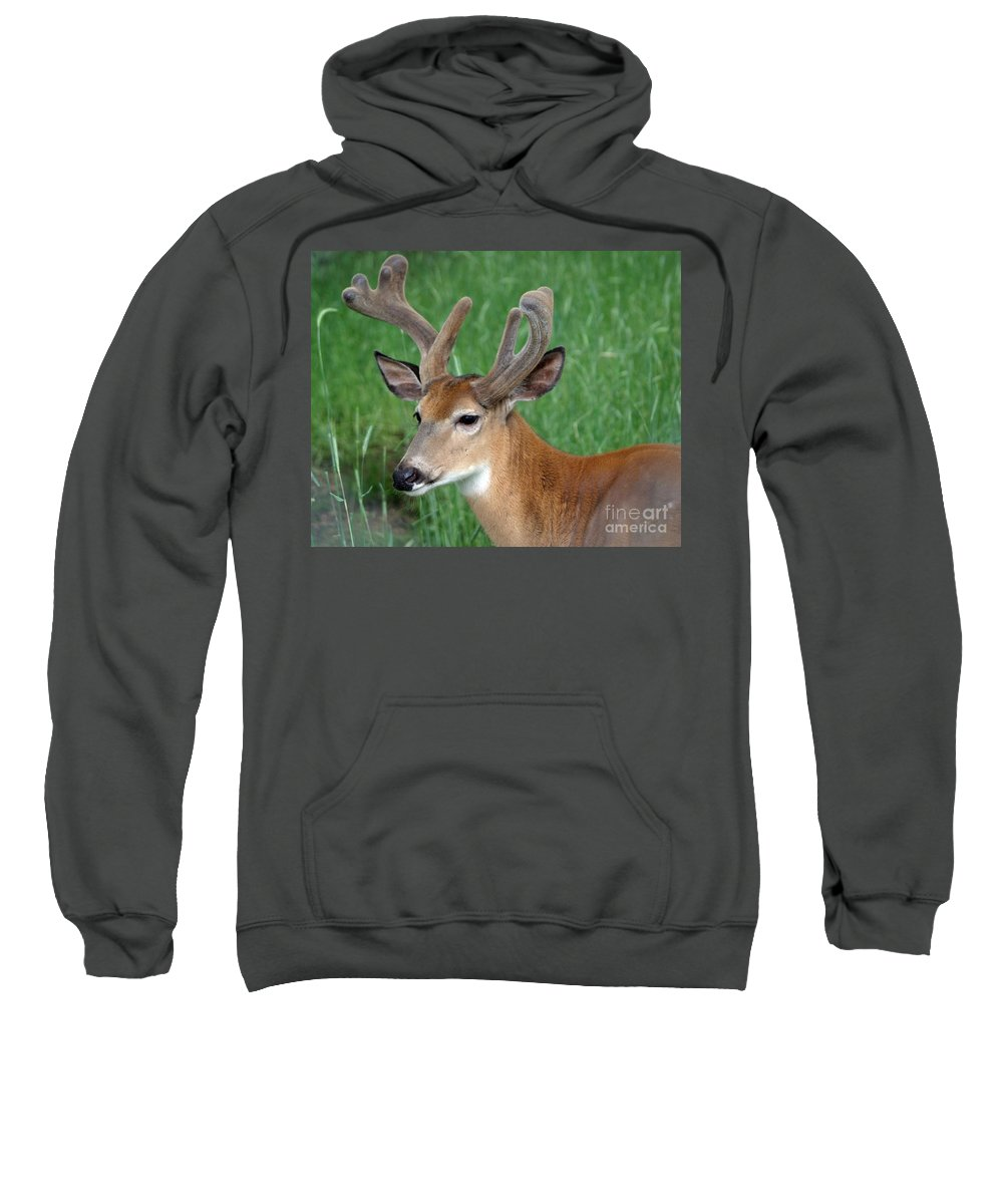 Deer Sweatshirt featuring the photograph Velvet by Living Color Photography Lorraine Lynch