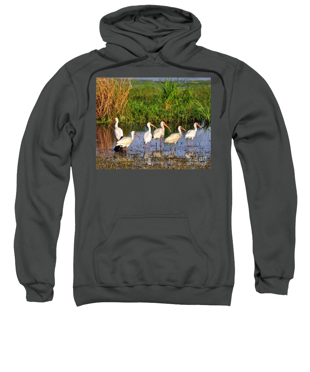 Ibis Sweatshirt featuring the photograph Wading Ibises by Al Powell Photography USA