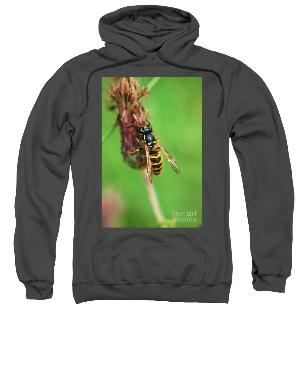 Yhun Suarez Sweatshirt featuring the photograph Wasp On Plant by Yhun Suarez