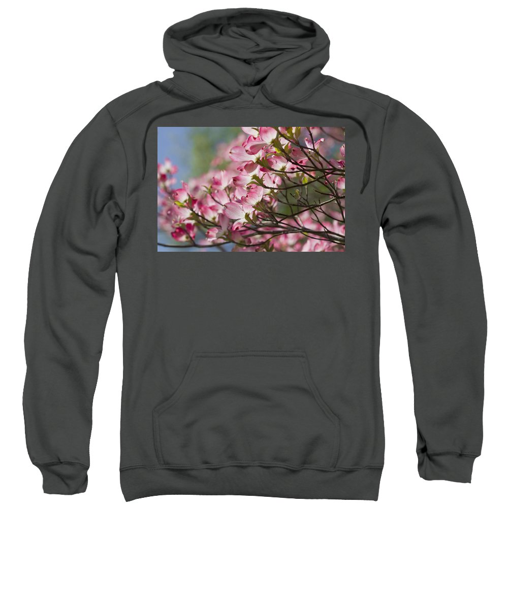 Pink Dogwood Sweatshirt featuring the photograph Waves Of Pink Light by Kathy Clark