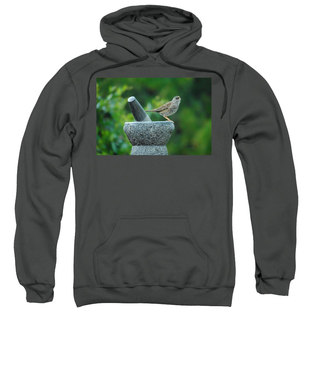 Sparrow Sweatshirt featuring the photograph Well Grounded by Donna Blackhall