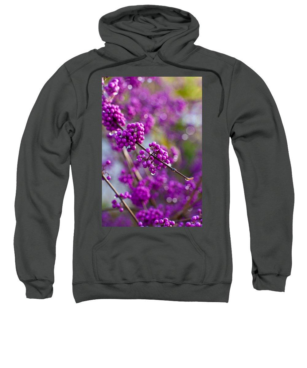 Beauty Berry Sweatshirt featuring the photograph Wet Purple by Mike Reid