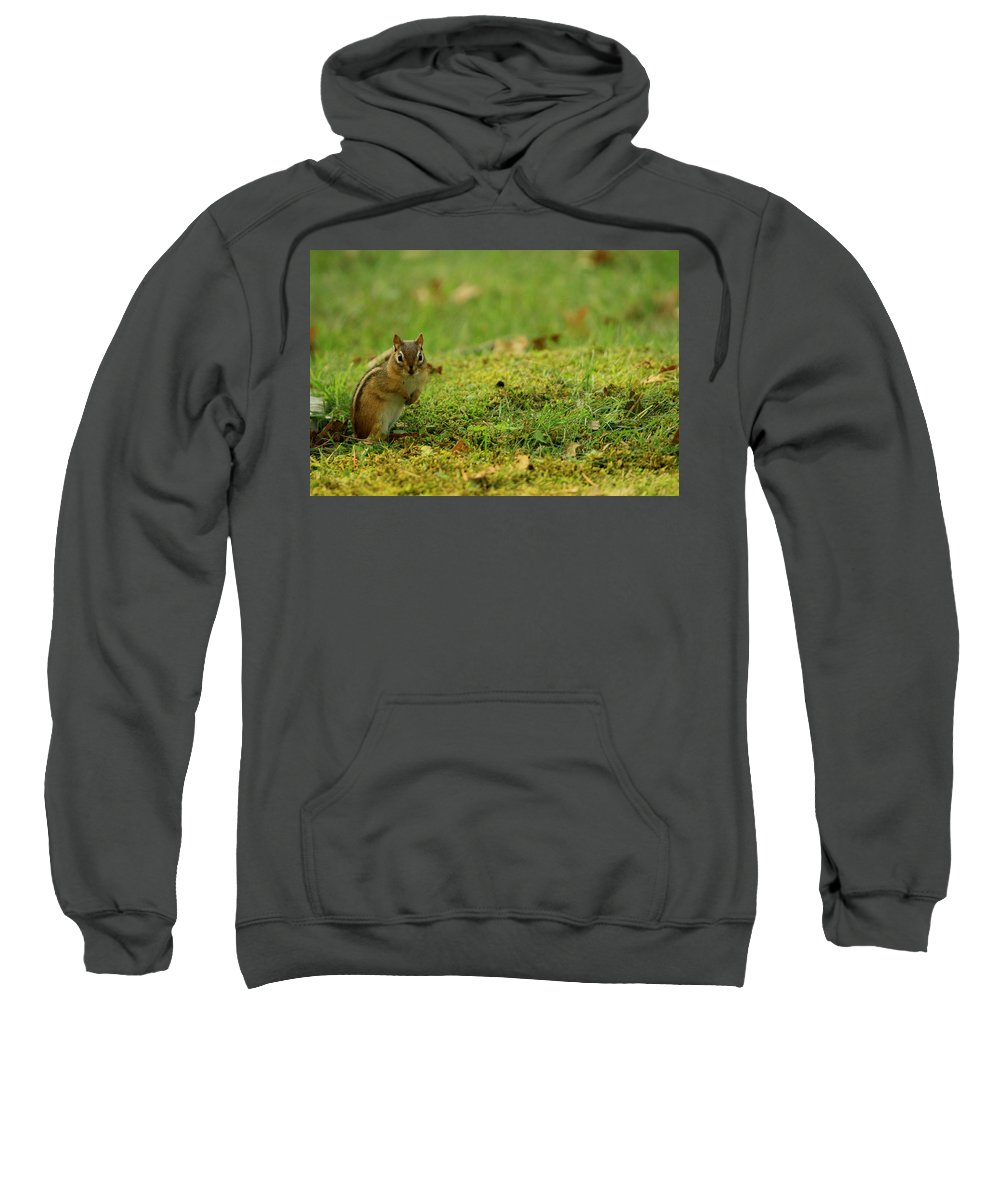 Wildlife Sweatshirt featuring the photograph What by Dennis Pintoski