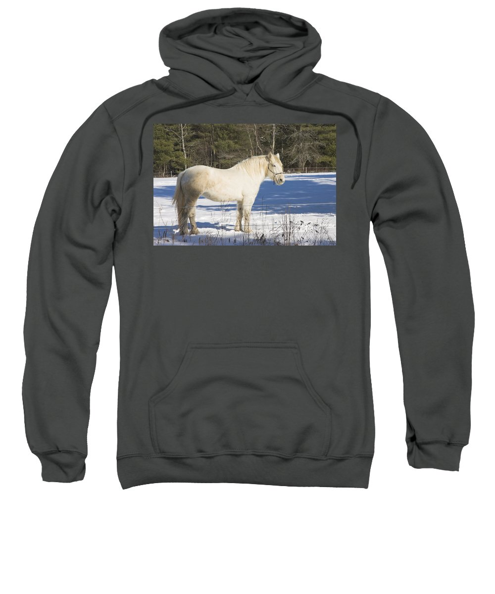 Equine Sweatshirt featuring the photograph White Horse In Winter Maine by Keith Webber Jr